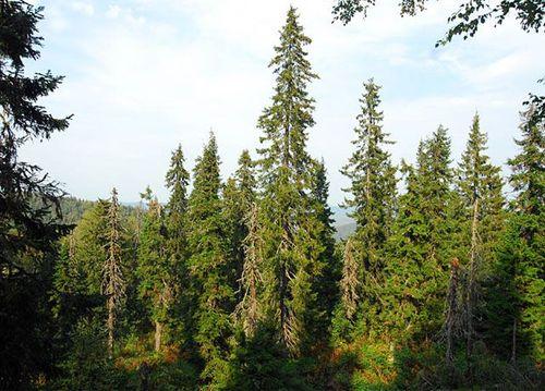 Природа Катав-Ивановского района