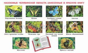 Насекомые Челябинской области занесенные в Красную книгу